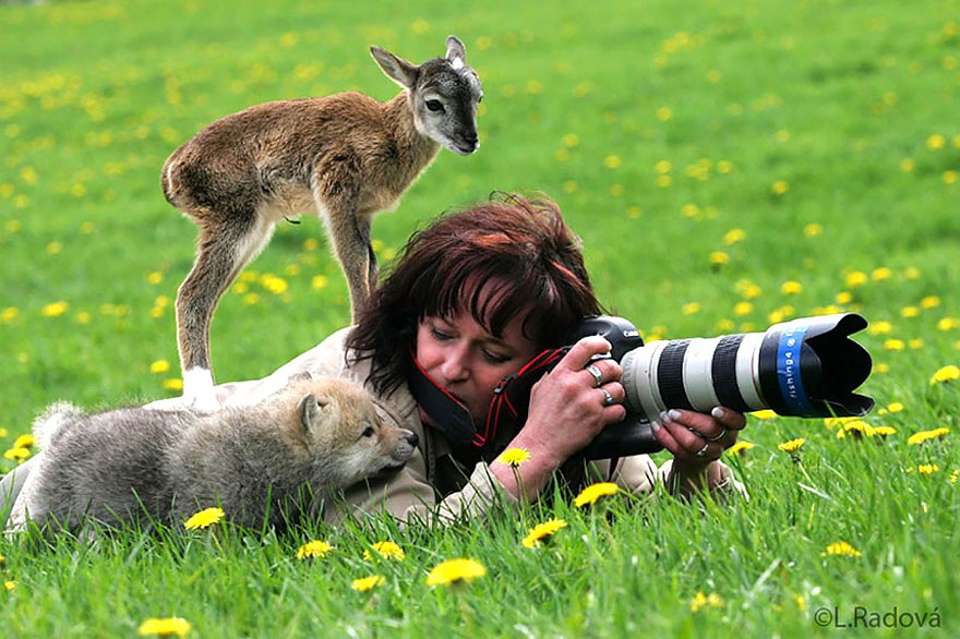 Wild Animals With Camera 99 20 Adorable Photos Of Animals That Want To Be Photographers