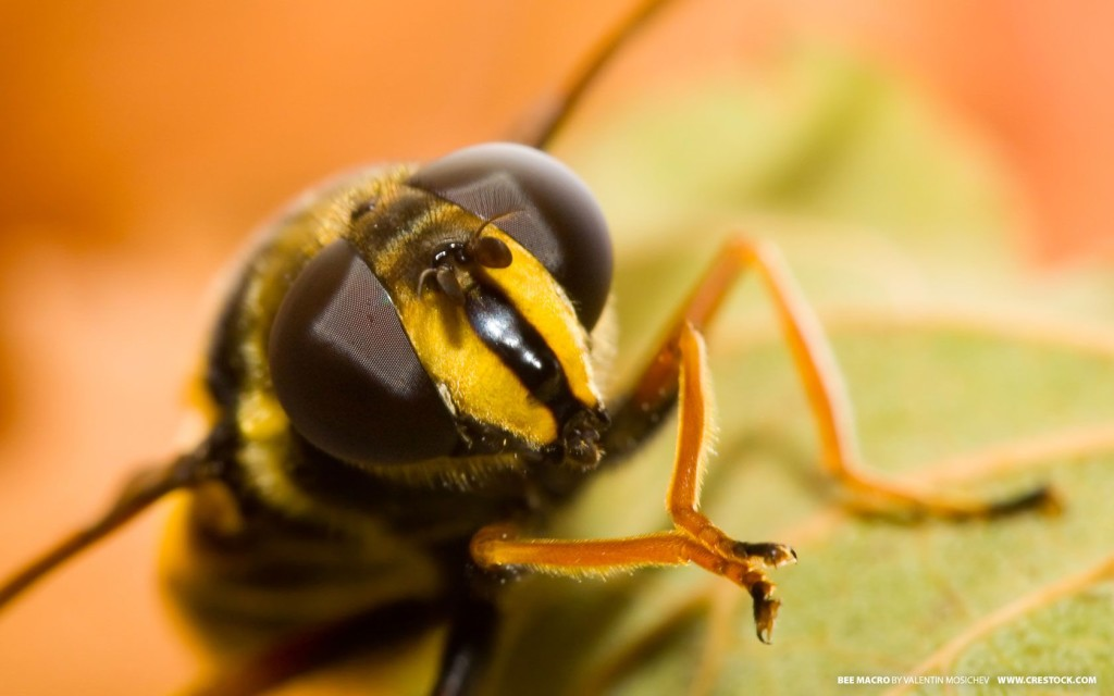 Wonderful Examples Macro Photography of Insect 99 1024x640 16 Mind Blowing Examples of Insect Macro Photography
