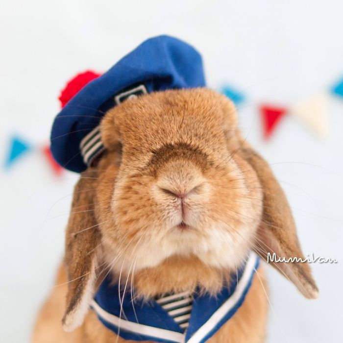 World's Most Cute Bunny 11 Meet PuiPui, The World's Most Stylish Bunny (10+ Pics)