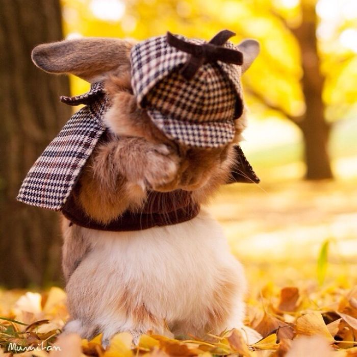 World's Most Cute Bunny 77 Meet PuiPui, The World's Most Stylish Bunny (10+ Pics)