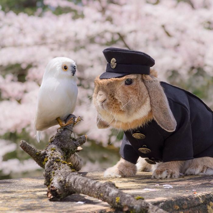 World's Most Cute Bunny 99 Meet PuiPui, The World's Most Stylish Bunny (10+ Pics)