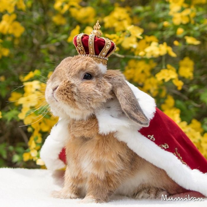 meet puipui the world s most stylish bunny 10 pics 99inspiration