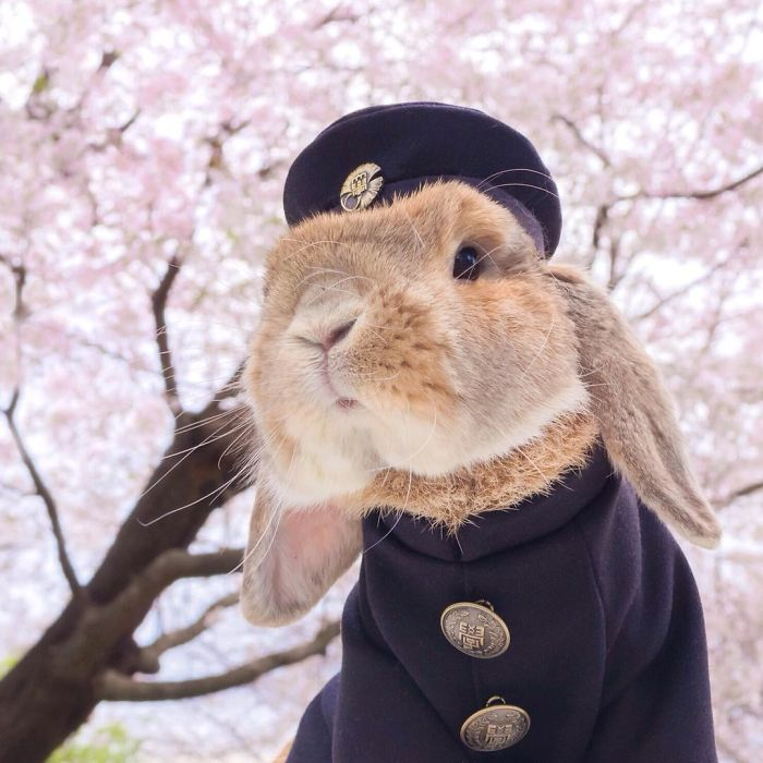 World's Most Stylish Bunny 99 Meet PuiPui, The World's Most Stylish Bunny (10+ Pics)