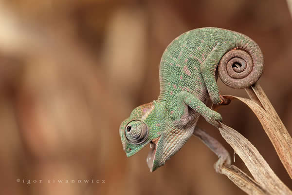 Beauty Concept Animals Photography by Blepharopsis 25 Mindblowing Macro Photography by Blepharopsis