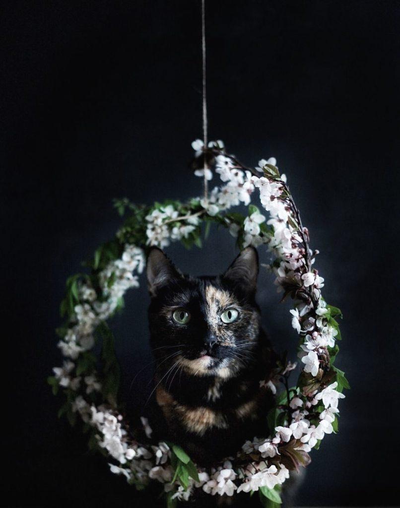 Cute Cat Portrait by Magdalena Grześkowiak 806x1024 Magdalena Grześkowiak Captures Stunning Of Her Cat Through The Seasons