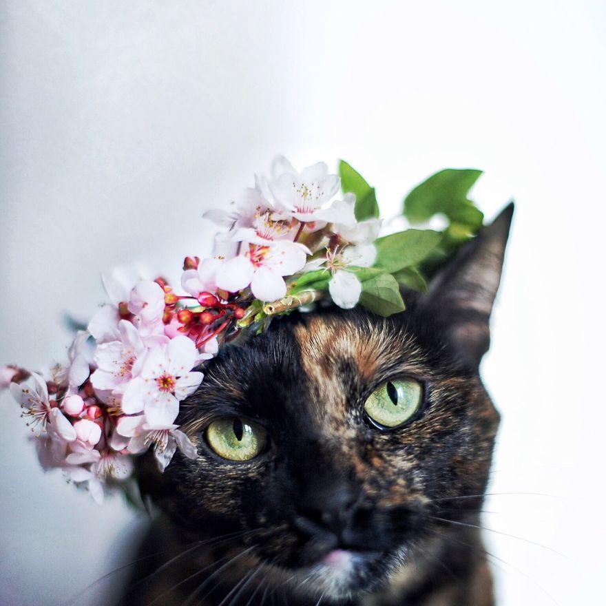 Magdalena Grześkowiak Captures Stunning Of Her Cat Through The Seasons Magdalena Grześkowiak Captures Stunning Of Her Cat Through The Seasons