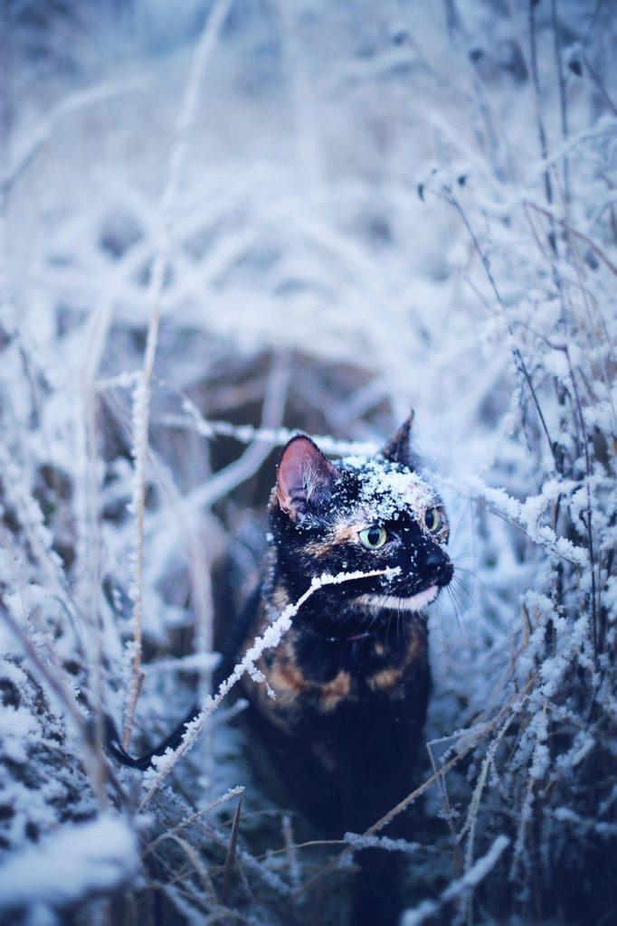 Stunning Cute Cat Through The Seasons 1 682x1024 Magdalena Grześkowiak Captures Stunning Of Her Cat Through The Seasons