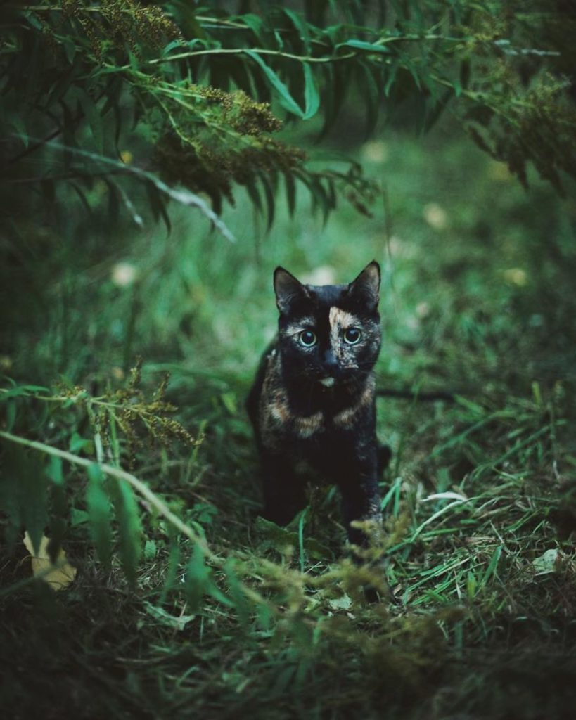 Stunning Cute Cat Through The Seasons 9 819x1024 Magdalena Grześkowiak Captures Stunning Of Her Cat Through The Seasons