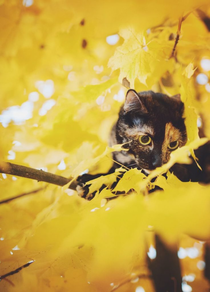 Stunning Cute Cat Through The Seasons 99 736x1024 Magdalena Grześkowiak Captures Stunning Of Her Cat Through The Seasons
