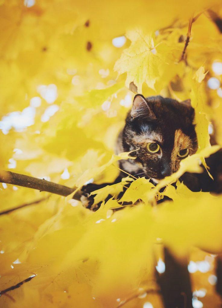 Stunning Cute Cat Through The Seasons 99 736x1024 Magdalena Grześkowiak Captures Stunning Of Her Cat Through The Seasons