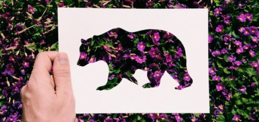 Artist Use Nature To Color Animal Paper Silhouettes