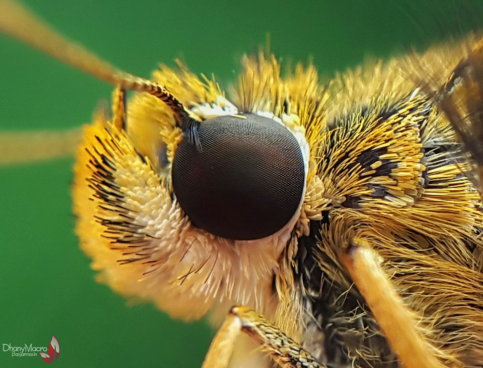 Extreme Insect Macro Photography by Dhany Creative Ideas for Photographing Nature with Smartphone