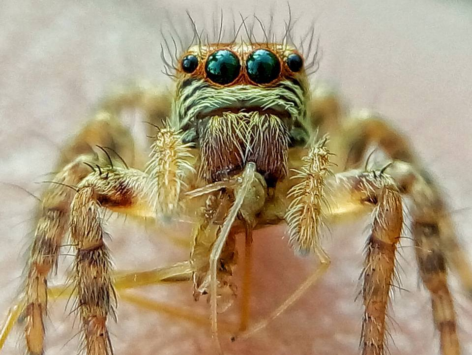 Extreme Insect Macro Photography by Rizky Akbar Creative Ideas for Photographing Nature with Smartphone