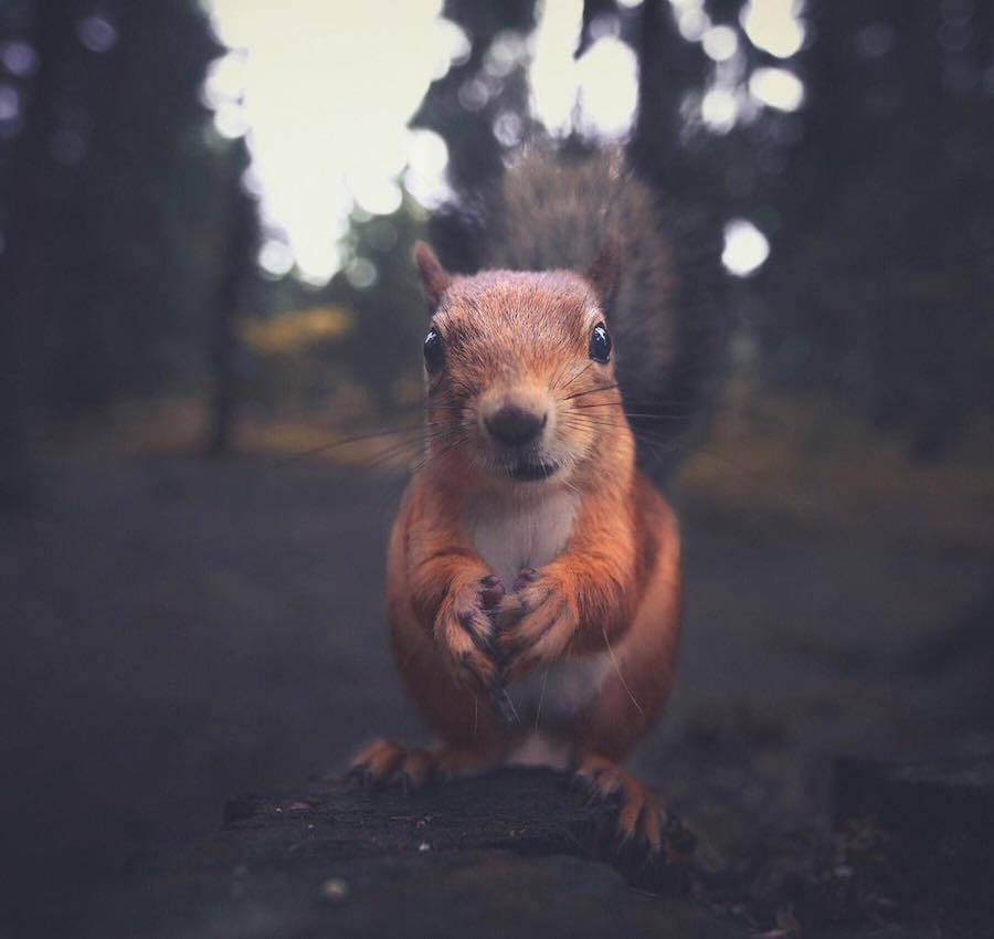 Konsta Punkka Photographer of Wild Animals 99 Capture the Emotions and Feelings of the Wild Animals