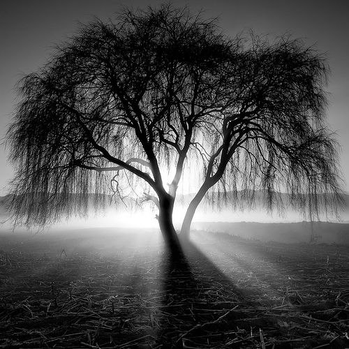 An Experiment in Black and White Landscape Photography |Nature Photography Black And White