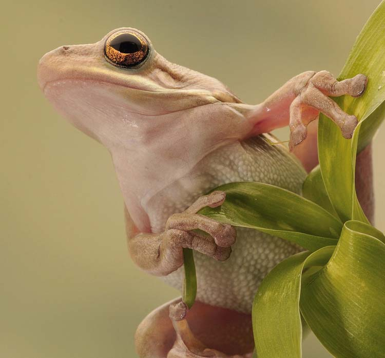 Best Frog photo with macro technique Best 20 Macro Photography Ideas That Will Make You Inspire
