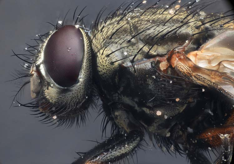 Detailed Macro Photography of incest Best 20 Macro Photography Ideas That Will Make You Inspire