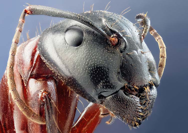 Extreme Ant Macro photos Best 20 Macro Photography Ideas That Will Make You Inspire