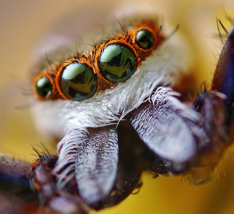 Extreme Macro Photography of spider Best 20 Macro Photography Ideas That Will Make You Inspire