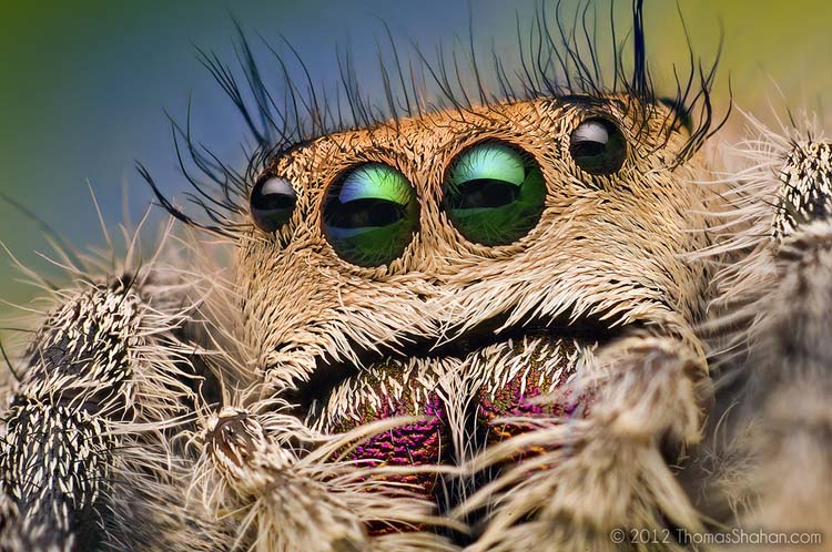 Extreme eyes of Jumpung spider Best 20 Macro Photography Ideas That Will Make You Inspire