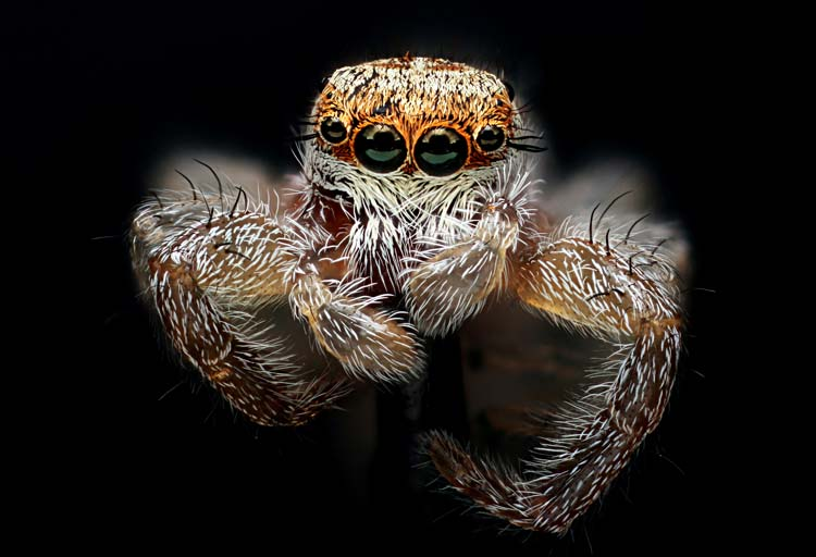 Wonderful eyes of Jumping spider with macro technique Best 20 Macro Photography Ideas That Will Make You Inspire