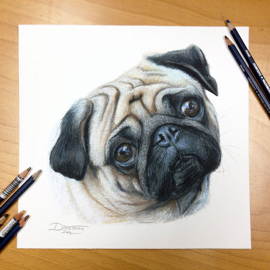 Realistic Pencil Drawings Examples Detailed Pencil Drawings By Dino Tomic
