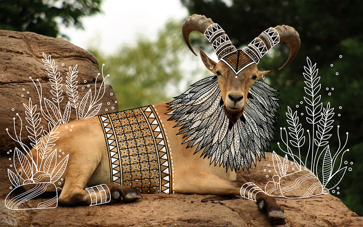 Beautiful Elegant Tribal Design Over Animal Photographs 7 Animal Doodles : Elegant Tribal Design Over Animal Photographs