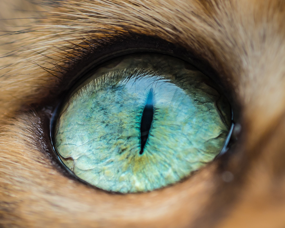 Beautiful Macro Shots of Cat Eyes by Andrew Marttila Fantastical Macro Shots of Cat Eyes by Andrew Marttila