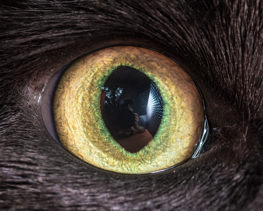 Fantastical Macro Photo of Cat Eyes by Andrew Marttila Fantastical Macro Shots of Cat Eyes by Andrew Marttila