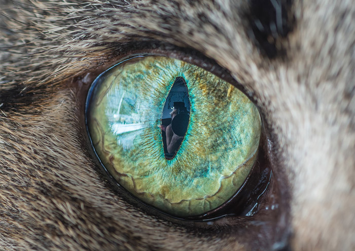 Fantastical Macro Shots of Cat Eyes by Andrew Marttila Fantastical Macro Shots of Cat Eyes by Andrew Marttila