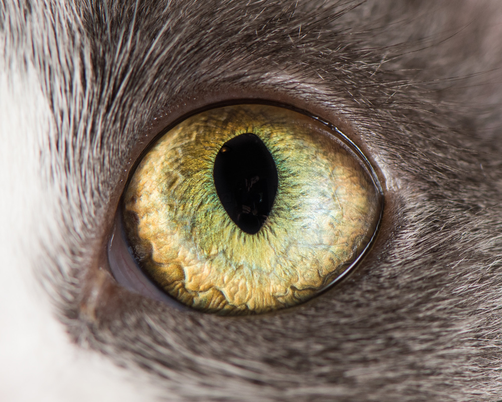 Macro Photo of Cat Eyes by Andrew Marttila 99 Fantastical Macro Shots of Cat Eyes by Andrew Marttila