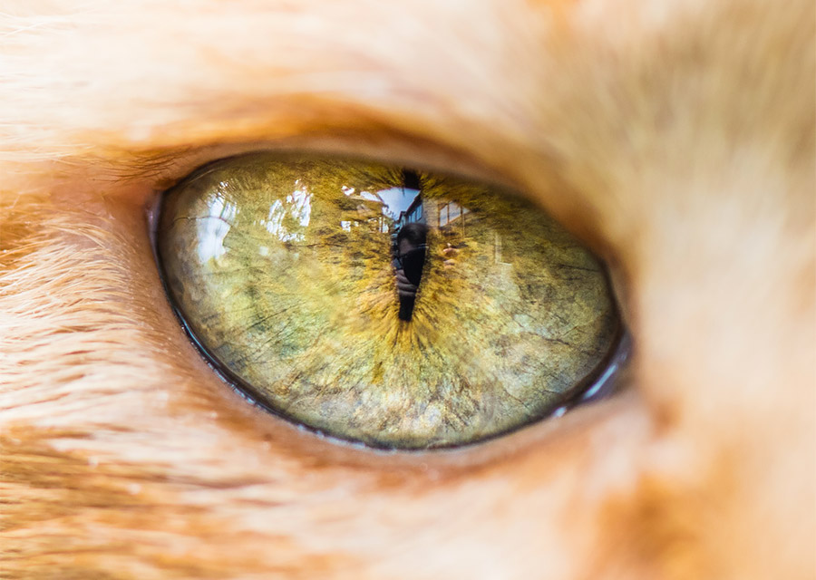 Macro Shots of Cat Eyes by Andrew Marttila Fantastical Macro Shots of Cat Eyes by Andrew Marttila
