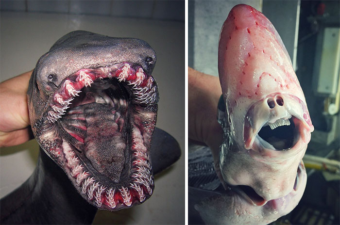 Russian Fisherman Posts Terrifying Creatures Of The Deep Sea