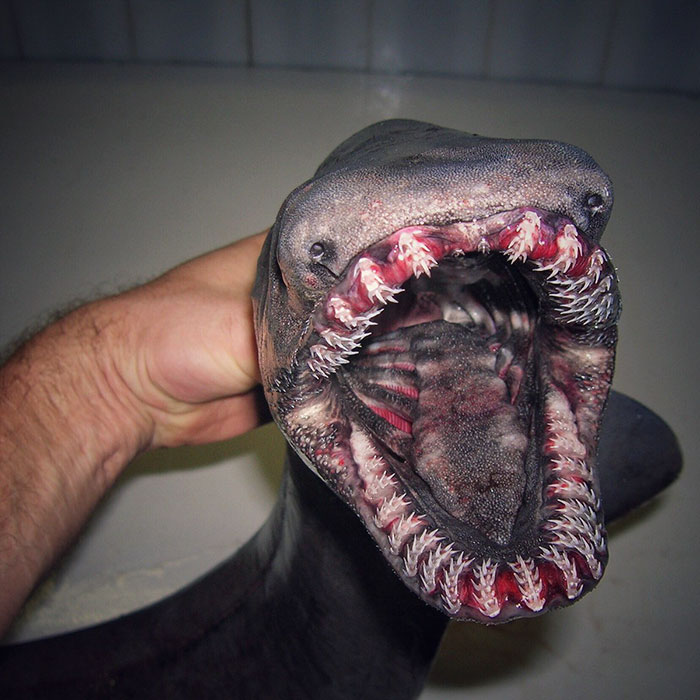 Russian Fisherman Posts Terrifying Creatures Of The Deep Sea Russian Fisherman Posts Terrifying Creatures Of The Deep Sea