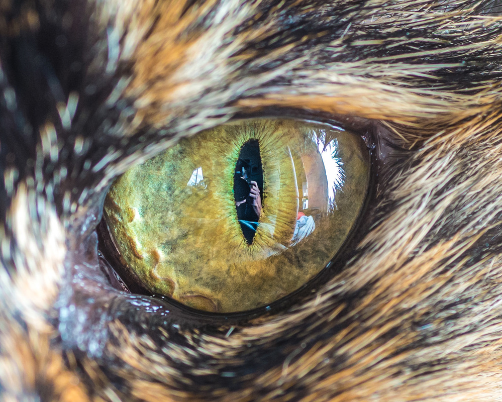 Stunning Macro Photo of Cat Eyes by Andrew Marttila 11 Fantastical Macro Shots of Cat Eyes by Andrew Marttila