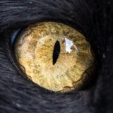 Fantastical Macro Shots of Cat Eyes by Andrew Marttila