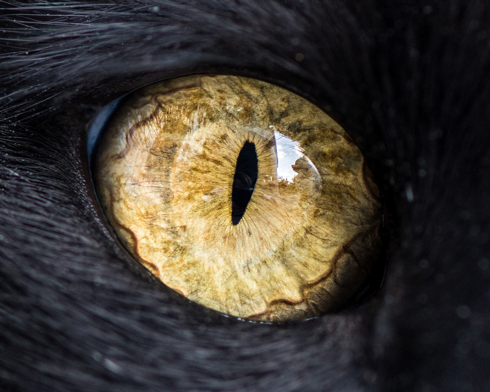 Fantastical Macro Shots of Cat Eyes by Andrew Marttila