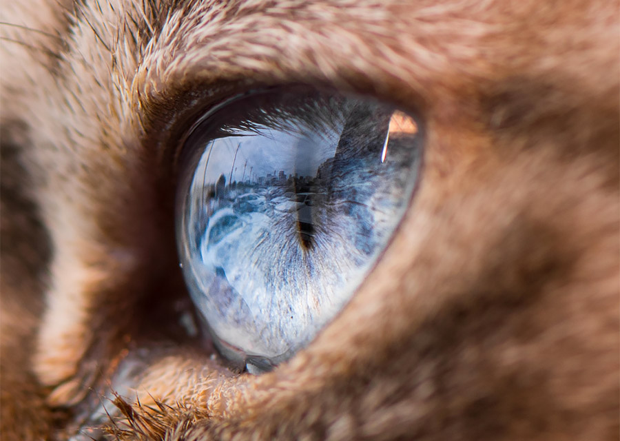 Stunning Macro Shots of Cat Eyes by Andrew Marttila Fantastical Macro Shots of Cat Eyes by Andrew Marttila