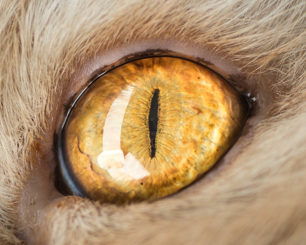 Wonderful Macro Photo of Cat Eyes by Andrew Marttila Fantastical Macro Shots of Cat Eyes by Andrew Marttila
