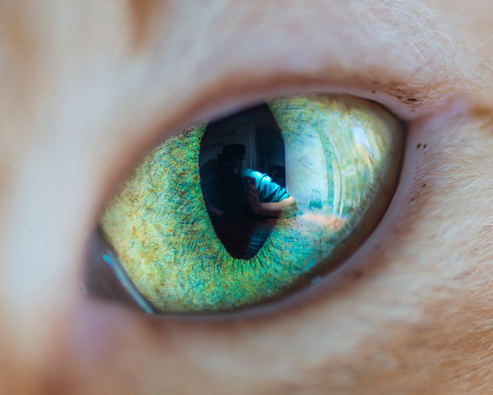 Wonderful Macro Shots of Cat Eyes by Andrew Marttila 77 Fantastical Macro Shots of Cat Eyes by Andrew Marttila