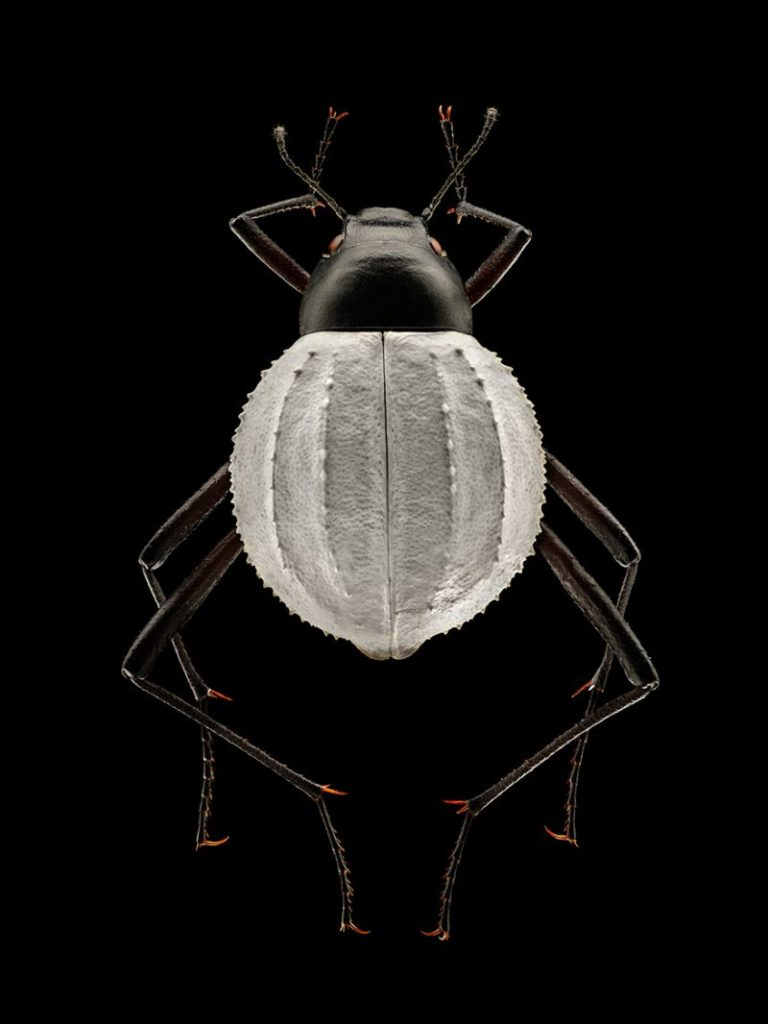 Amazing Insect Portraits Under The Microscope by Levon Biss 768x1024 Wonderful Insect Portraits Under The Microscope by Levon Biss
