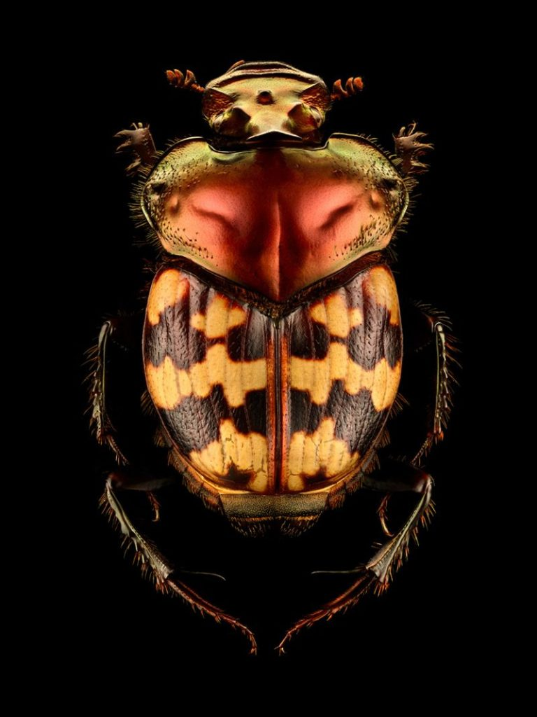 Amazing Insect Portraits Under The Microscope by Levon Biss 77 768x1024 Wonderful Insect Portraits Under The Microscope by Levon Biss