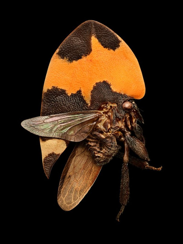 Amazing Insect Portraits Under The Microscope by Levon Biss 99 768x1024 Wonderful Insect Portraits Under The Microscope by Levon Biss
