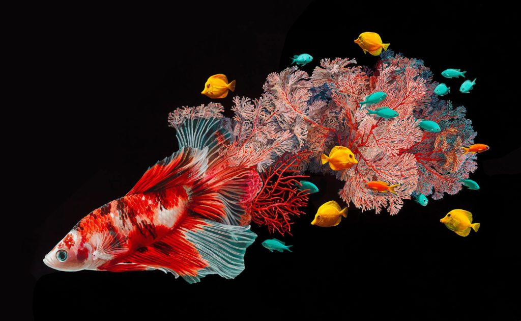 Hyperrealistic Depictions of Fish Merged by Lisa Ericson 1024x630 Lisa Ericson, Hyperrealistic Depictions of Fish Merged With Their Coral Environments