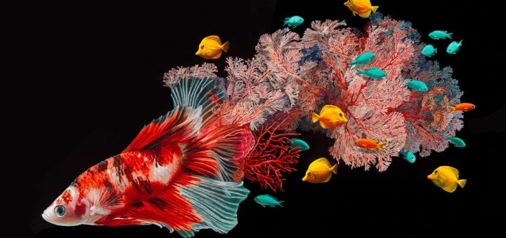 Lisa Ericson, Hyperrealistic Depictions of Fish Merged With Their Coral Environments