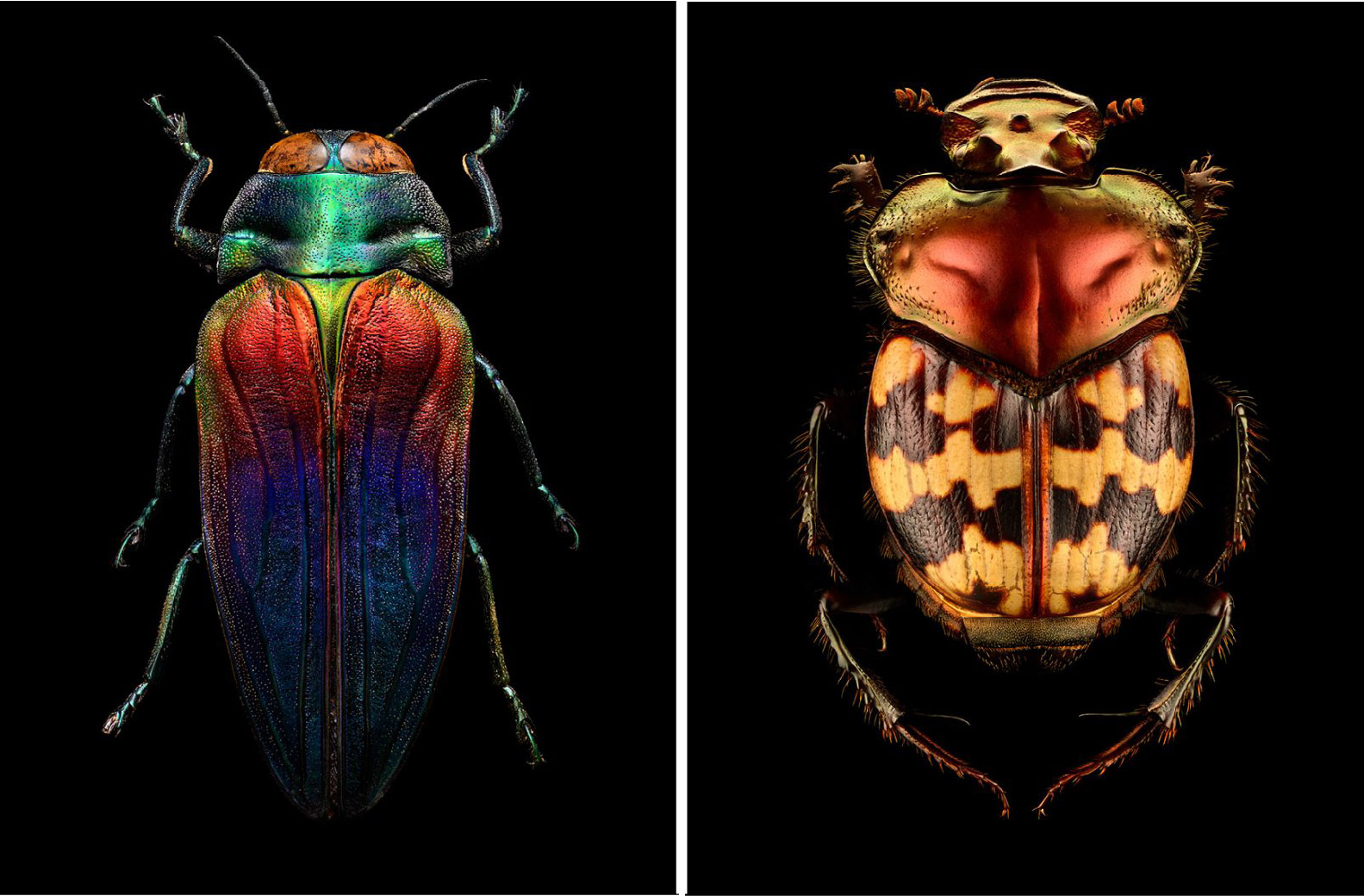 insect-portraits-under-the-microscope-by-levon-biss-17