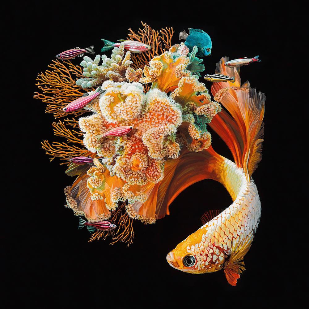 Lisa Ericson Hyperrealistic Depictions of Fish Merged With Their Coral Environments 99 Lisa Ericson, Hyperrealistic Depictions of Fish Merged With Their Coral Environments