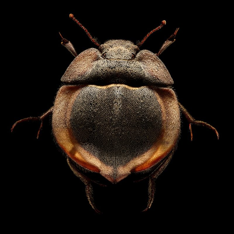 Wonderful Insect Portraits Under The Microscope by Levon Biss