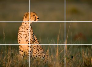 Getting To Know The Rules Of Third Composition For More Beautiful Photographs