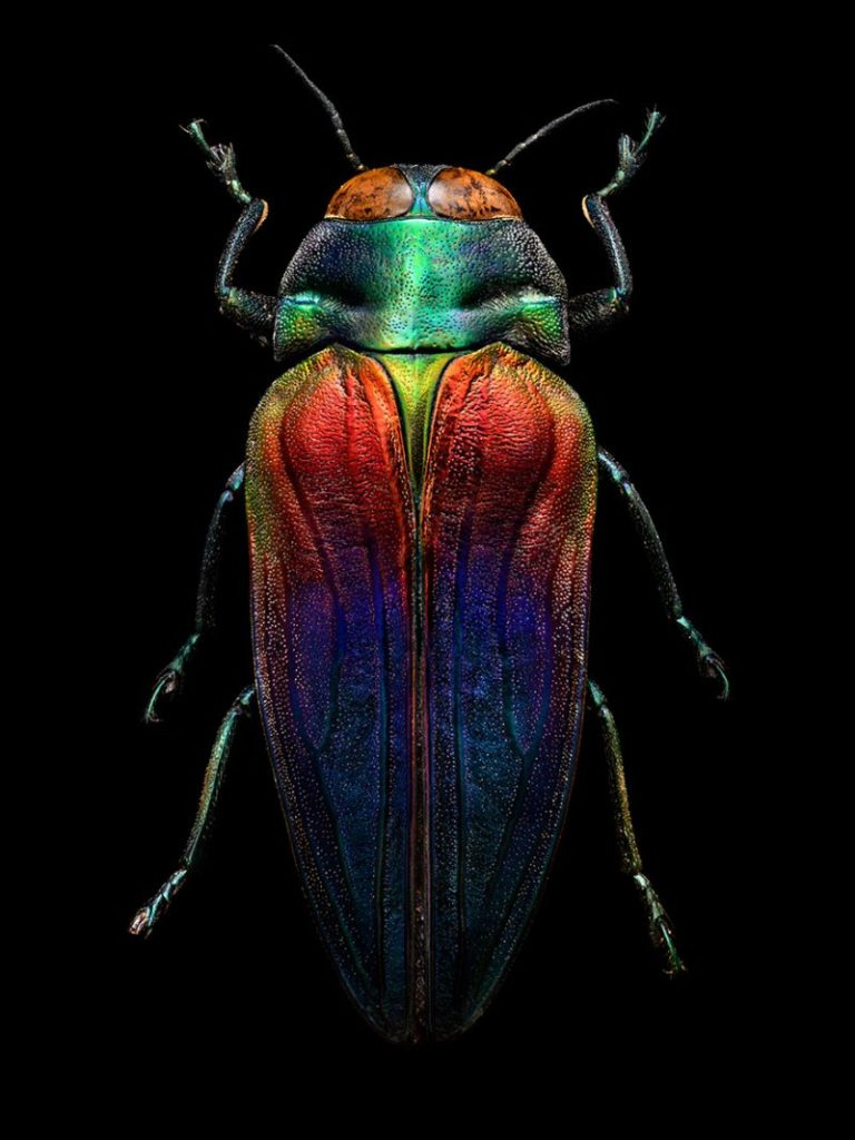 Wonderful Insect Portraits Under The Microscope by Levon Biss 36 768x1024 Wonderful Insect Portraits Under The Microscope by Levon Biss